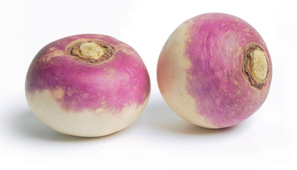 Two Turnips on a white background.