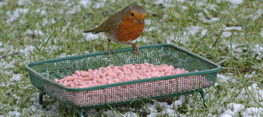 Don't cause bird fat-alities this Christmas