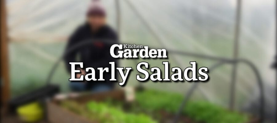 Video: Salads You Can Grow Early