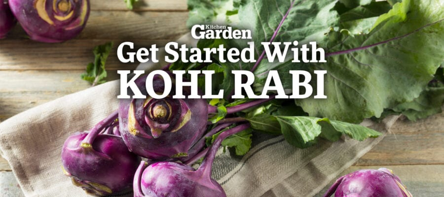 Video: How to Get Started Growing Kohl Rabi