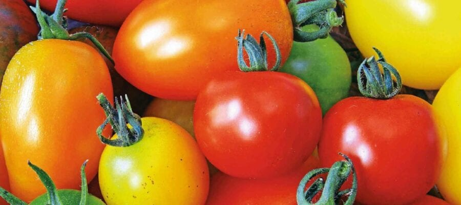 Back To Basics... With Tomatoes