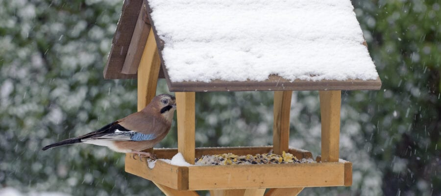 Cold winds set to ruffle feathers