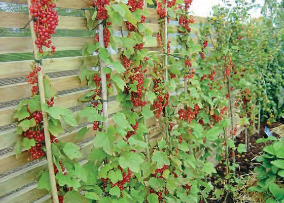 Jobs For The Month: On The Veg Patch