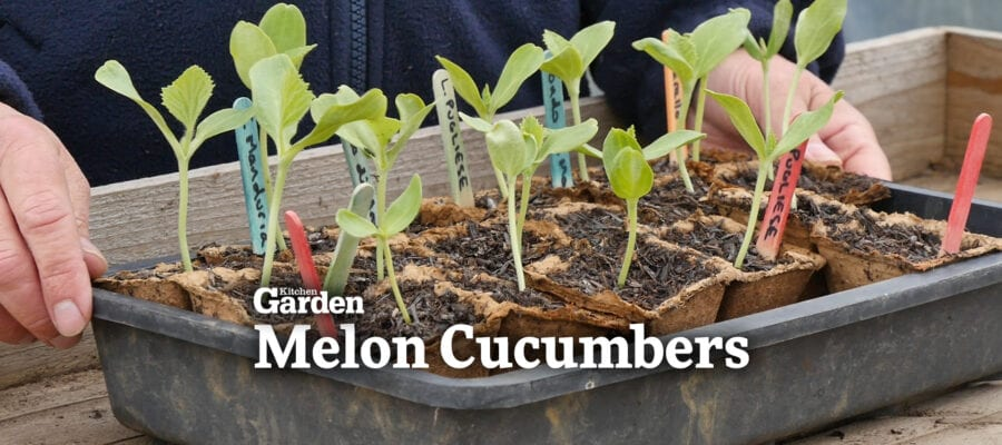 Video: An Introduction to Melon Cucumbers