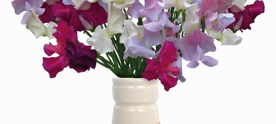 Limited-edition vases for Unwins customers