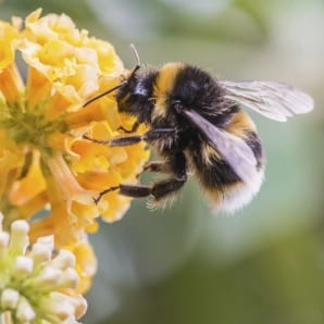 TV wildlife presenters urge public to join Great British Bee count 2015