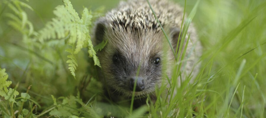 New survey reveals the mysterious creatures living in your garden