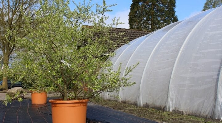 Expert advice on fruit in pots