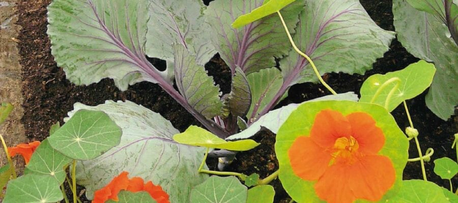 Winter Treats From Sowings Now