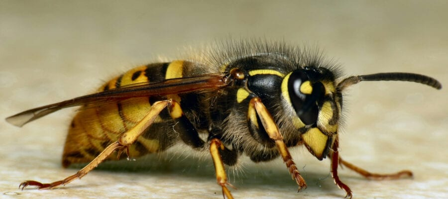 Take action to prevent wasps having an autumn sugar rush
