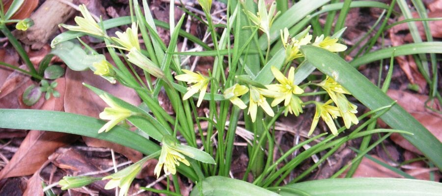 Project to save sole surviving population of rare wildflower