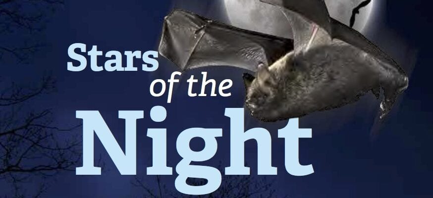 Act for bats!