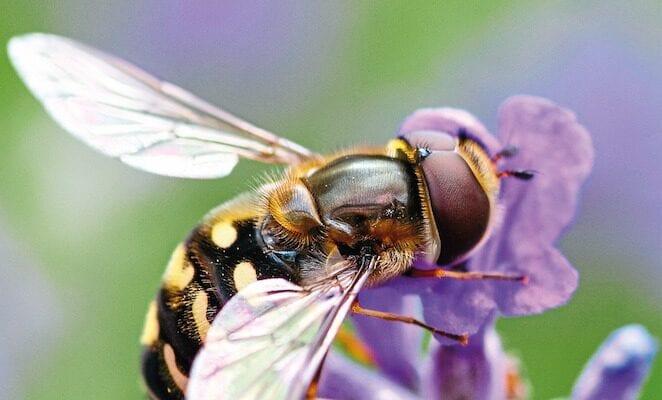 Fears for insects as numbers decline