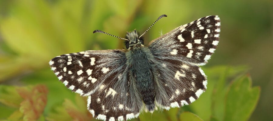 Bad year for butterflies