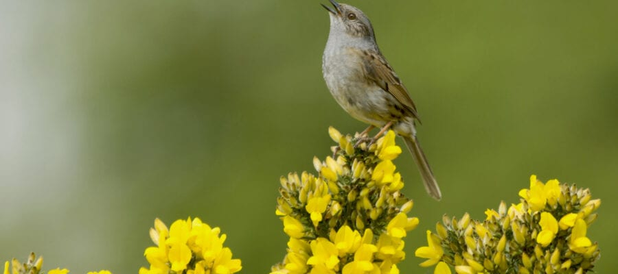 Sing... it's nearly spring!