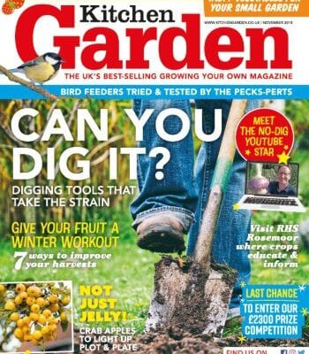 November issue now on sale!