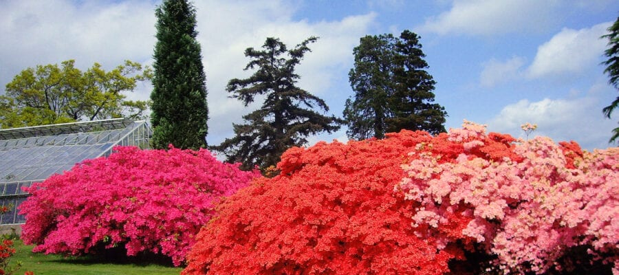 New Owner for Leonardslee Gardens Estate, West Sussex