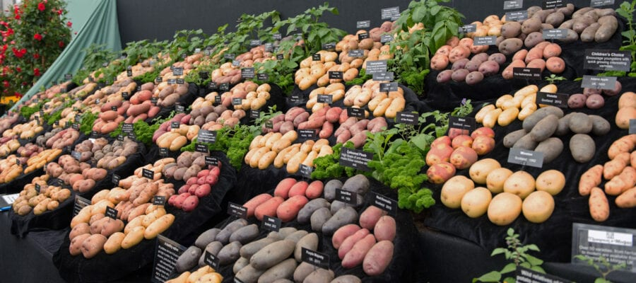 Potatoes win second Chelsea Gold