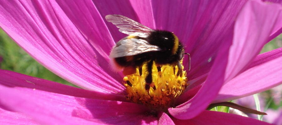 Bee more friendly to pollinators!