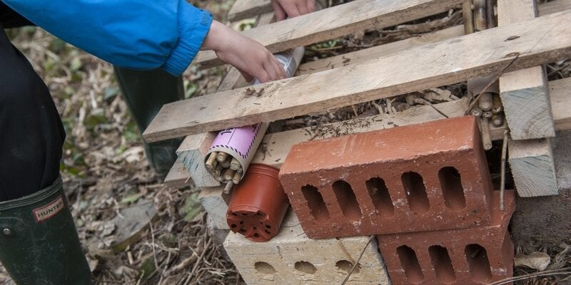 Making an insect hotel