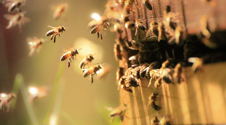 Celebrate World Bee Day May 20
