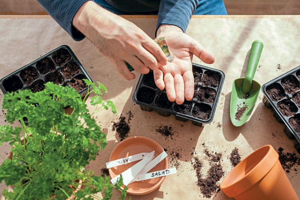 Hands holding a seed packet over a cell tray, surrounded by gardening tools and other cell trays on a table.