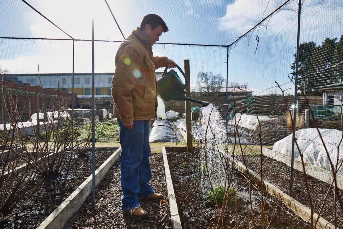 Gardening can be a great way to maintain mental health